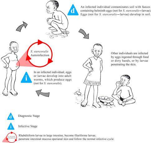 define helminthiasis in tamil
