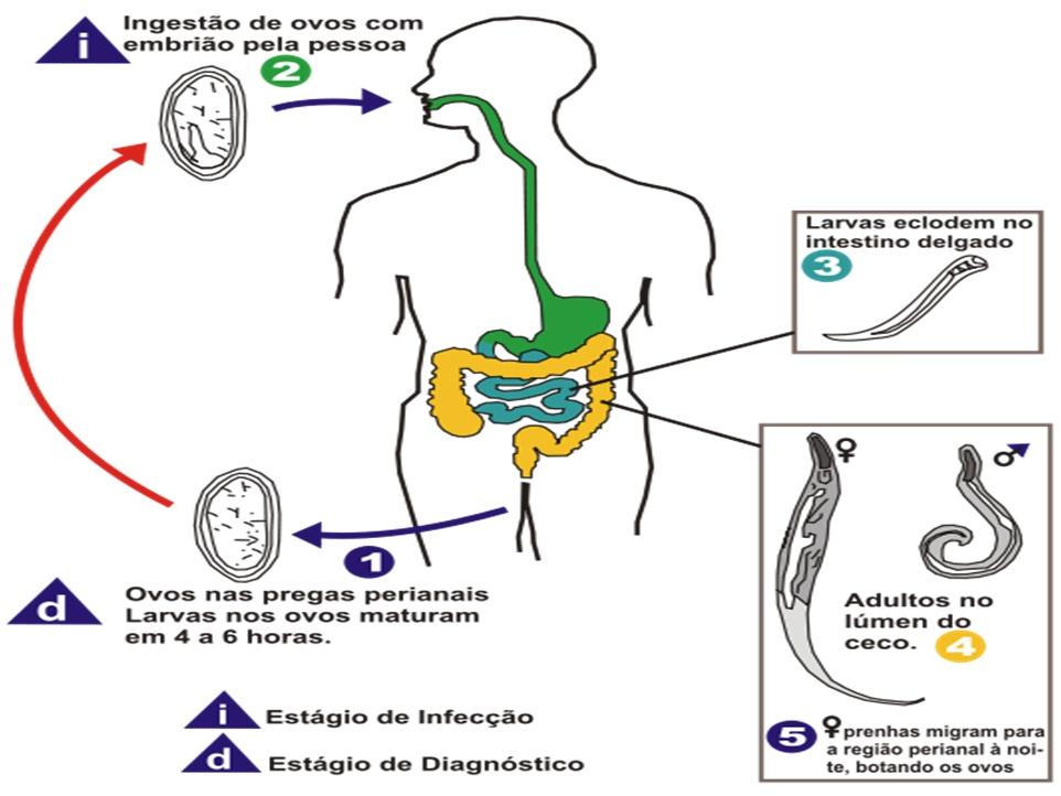 Analiza pentru prezența paraziților în organism - Detoxic