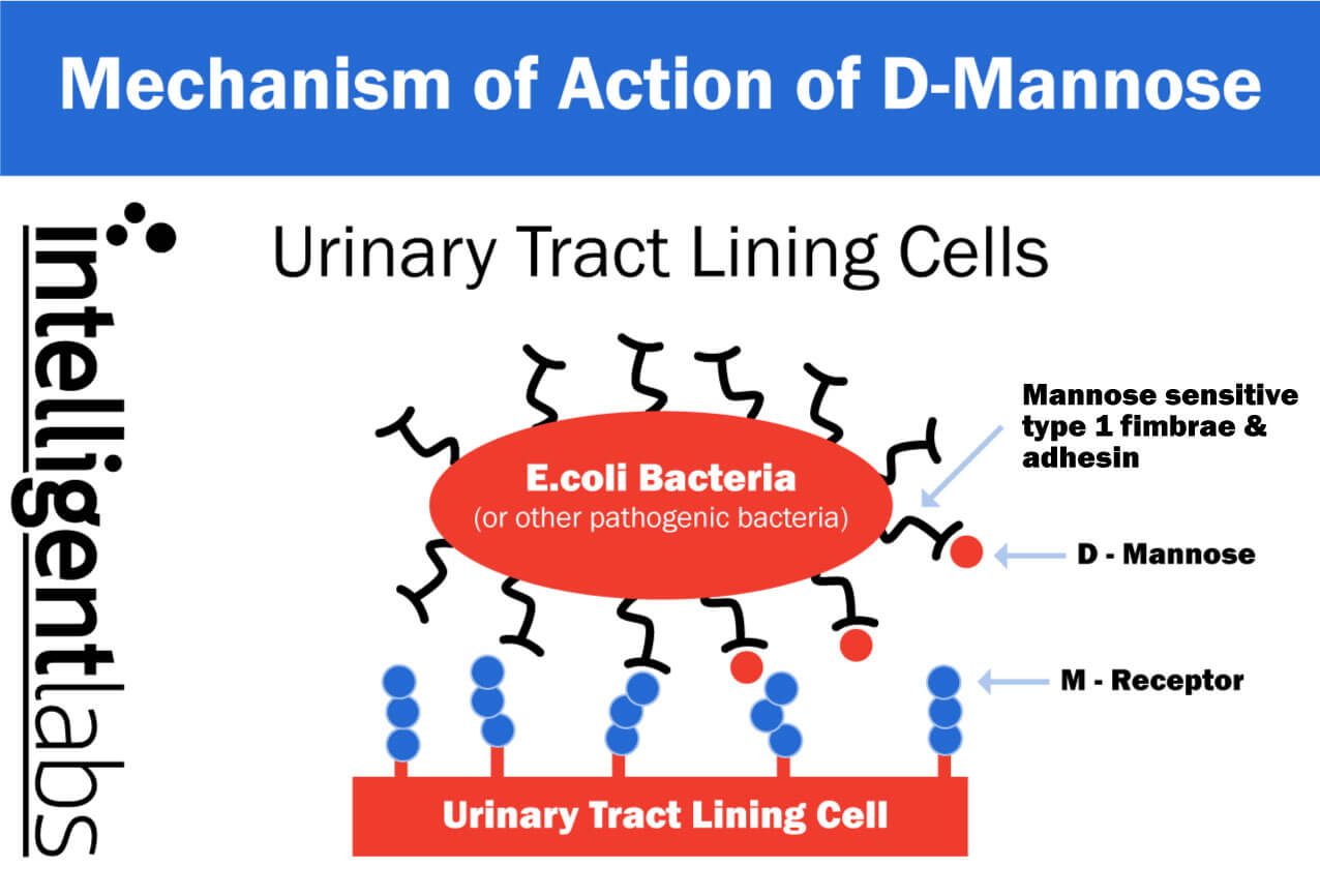dysbiosis urinary tract infection
