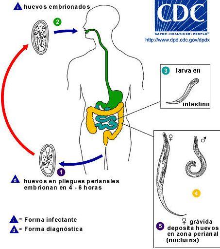 oxiuros tratamiento uruguay genome human papillomavirus type 6