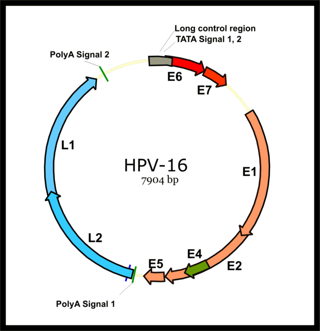 colorectal cancer 40s hpv high risk type 16