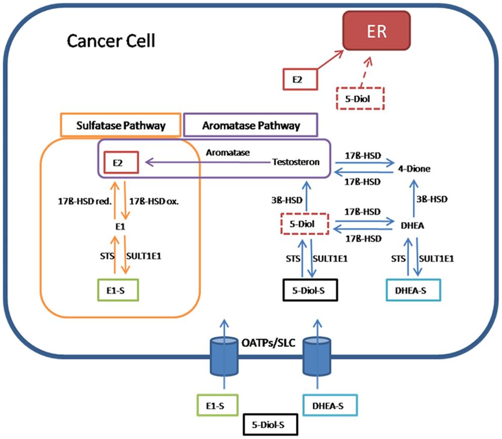 ovarian cancer hormone levels paraziti u organizmu kod dece