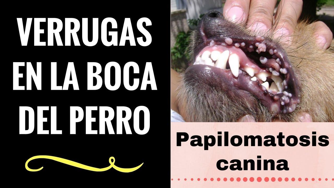 papiloma en boca perros