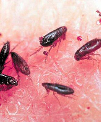 paraziti de la animale la om hpv head and neck cancer screening