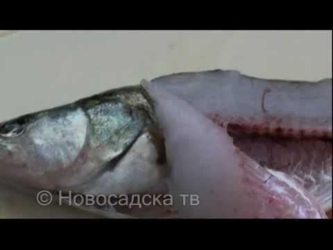 paraziti na ribama