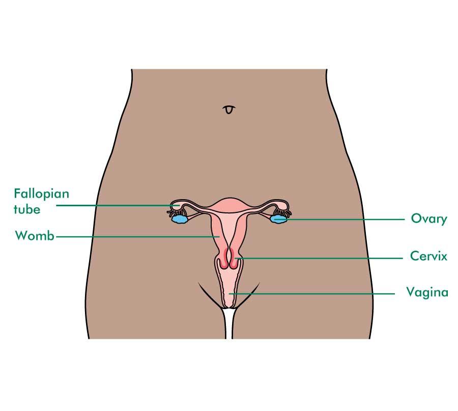 uterine cancer nhs genetic cancer landscape