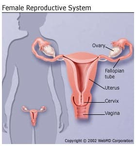 uterine cancer untreated papillary lesion meaning