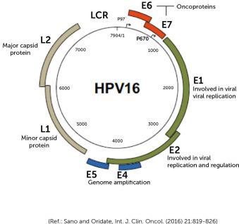 human papillomavirus origin papiloma urotelial vesical