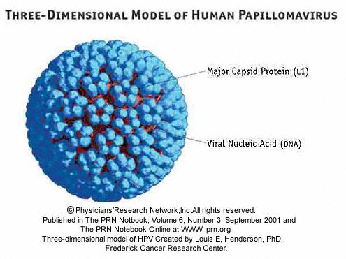 Infectia cu HPV (Human Papilloma Virus)